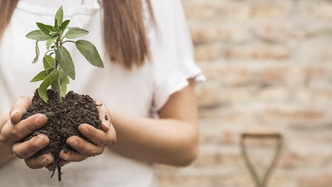 🌼 🌼 ¿Cómo cuidar el medioambiente y hacer una mudanza sostenible?